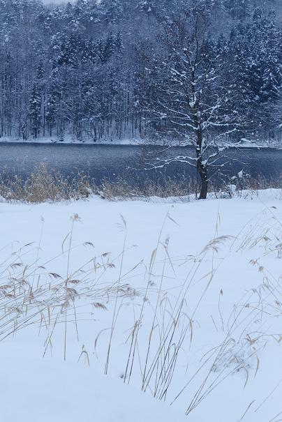 仁科3湖・・・冬景