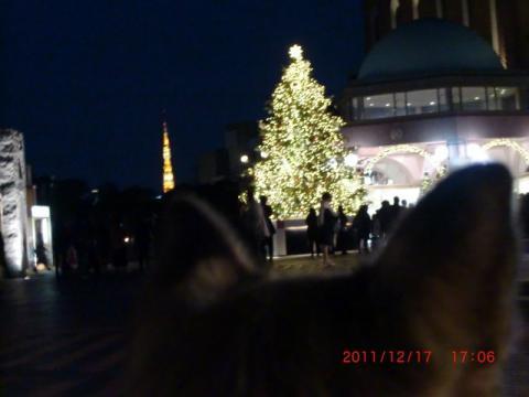 夜景のツリーと東京タワー_