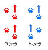 側対歩解説図