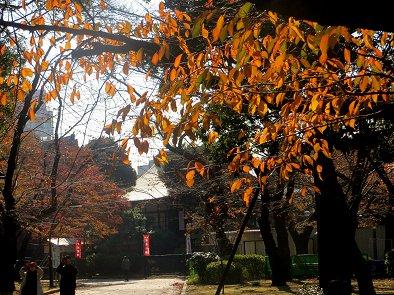晩秋の上野公演の陽射しREVdownsize