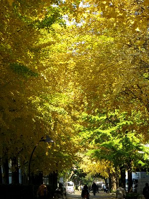 秋が深まりゆく小路downsize