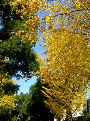 黄色と緑のコンチェルトdownsize