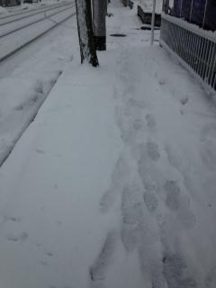 2014.2.14 雪1