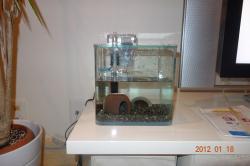 ヤビーの水槽1
