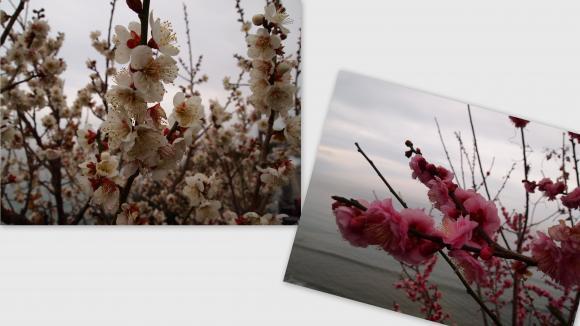 2011-02-2311_convert_20111106205307.jpg
