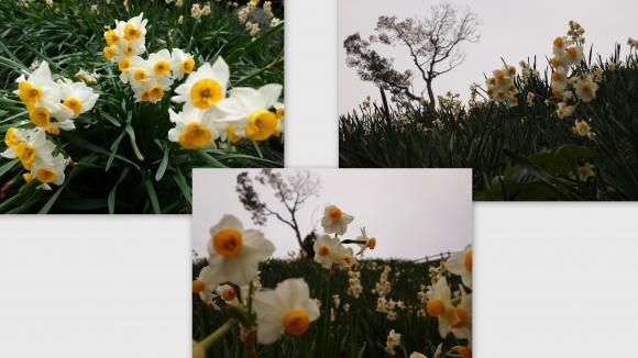 2011-02-239_convert_20111106205238.jpg