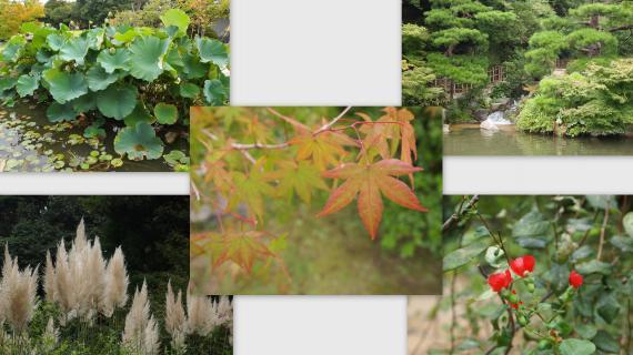 2011-09-09_convert_20110925203251.jpg