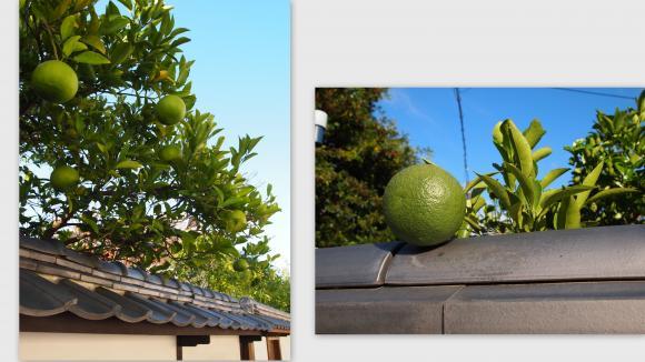2011-10-2312_convert_20111026025244.jpg