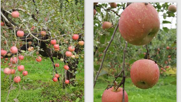 2011-10-232_convert_20111023230352.jpg