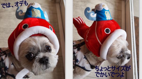 2011-11-274_convert_20111129013840.jpg