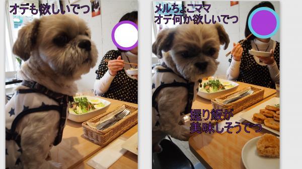 2011-11-27_convert_20111129021842.jpg