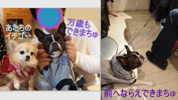 2011-11-28_convert_20111129021904.jpg