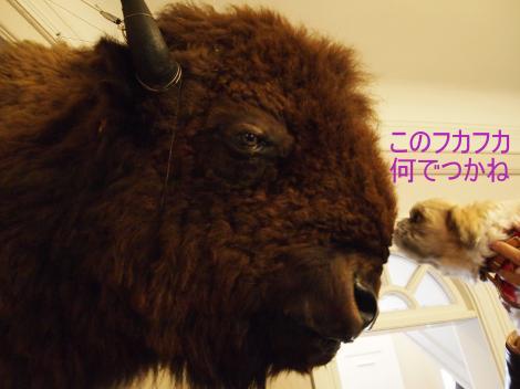 ・搾シ儕2221844_convert_20110913150221