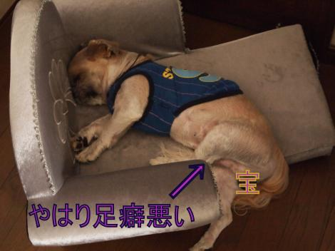 ・搾シ単9186588_convert_20110919225213