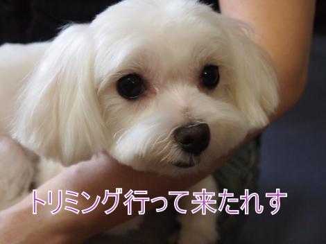 ・搾シ儕9176551_convert_20110921020636