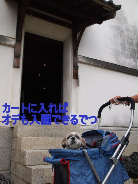 ・搾シ姫9096367_convert_20110925203623