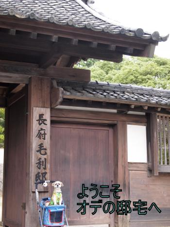 ・搾シ鳳9096398_convert_20110926164804