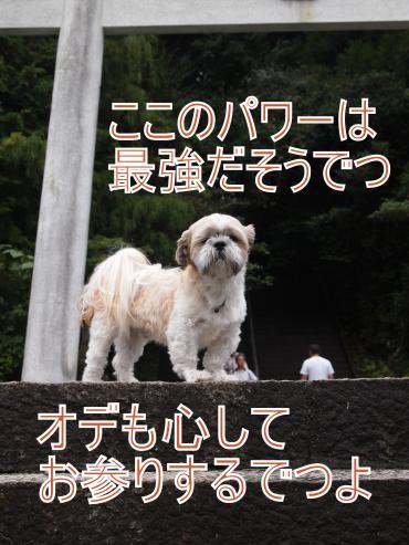 ・搾シ儕9046209_convert_20110928022212