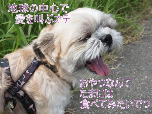 ・搾シ儕8306112_convert_20110928030742