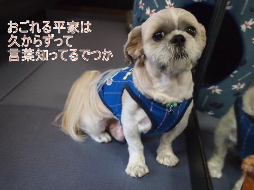 ・搾シ儕9176553_convert_20110929014848