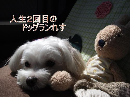 ・搾シ儕9236714_convert_20111014020152