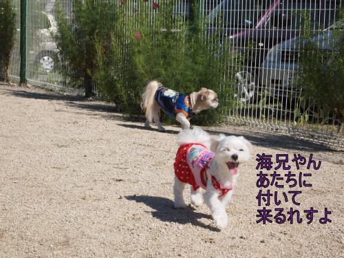 ・搾シ捻9236749_convert_20111014015916
