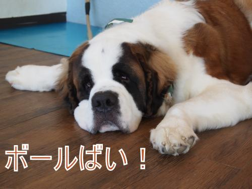 ・搾シ鳳9236725_convert_20111014020019