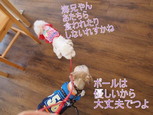 ・搾シ鳳9236734_convert_20111014020055