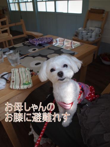 ・搾シ儕9236727_convert_20111014020213