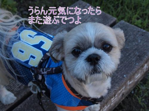 ・搾シ鳳9236773_convert_20111014173715