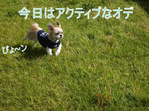 ・搾シ娠9226636_convert_20111015010509