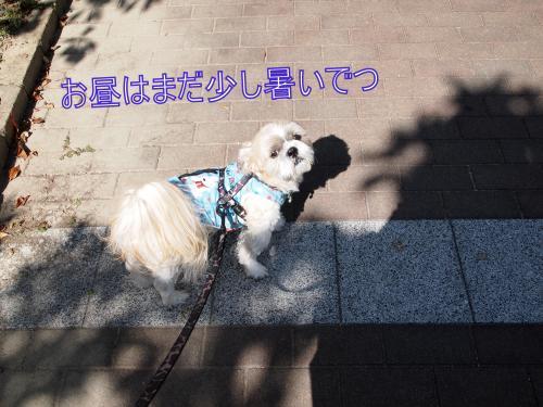 ・搾シ鳳A187309_convert_20111020005742