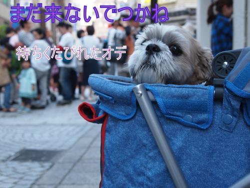 ・搾シ単A097203_convert_20111020154618