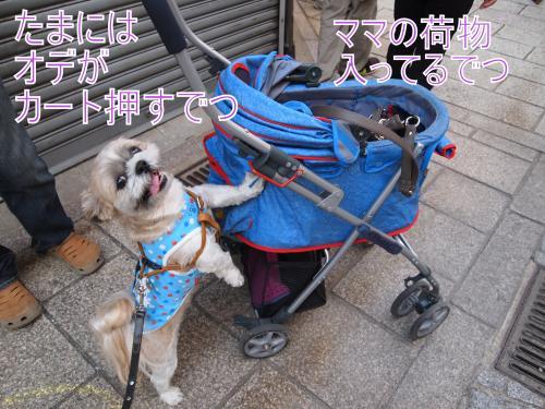 ・搾シ撤A097189_convert_20111020154657