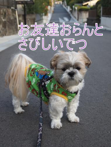 ・搾シ姫B017585_convert_20111104030944