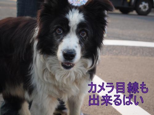 ・搾シ善B017589_convert_20111104030733