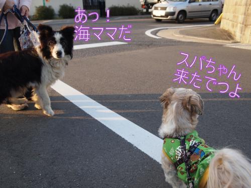 ・搾シ撤B017590_convert_20111104030907