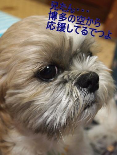 ・搾シ榔B087647_convert_20111112011446