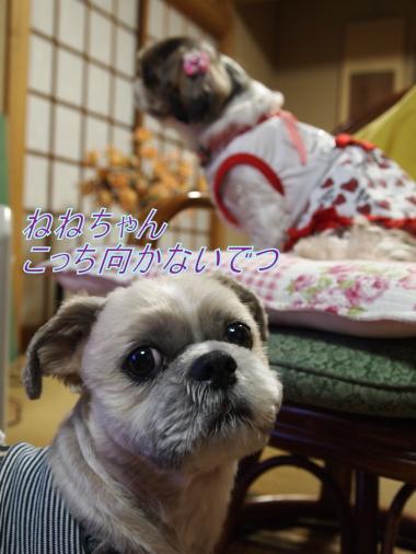 ・搾シ単B097663_convert_20111113193321