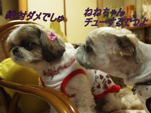 ・搾シ善B097682_convert_20111113193303