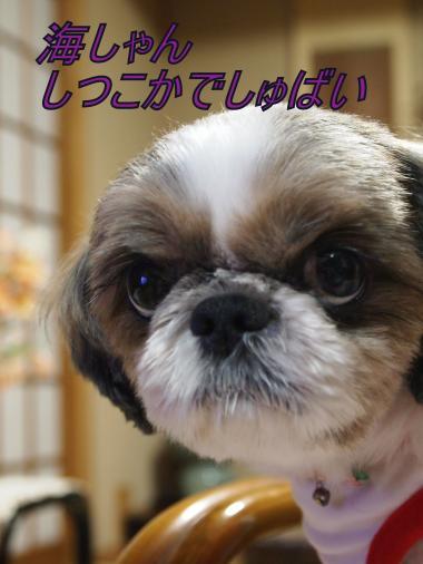 ・搾シ儕B097662_convert_20111113193448
