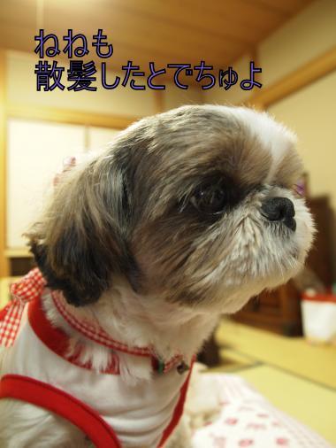 ・搾シ撤B097678_convert_20111113193338