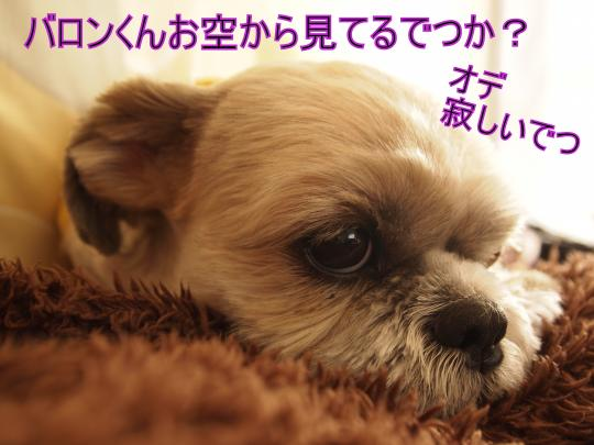 ・搾シ単B157724_convert_20111121224302