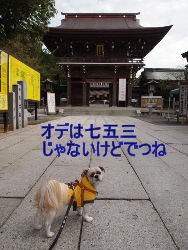 ・搾シ撤B117699_convert_20111124000556