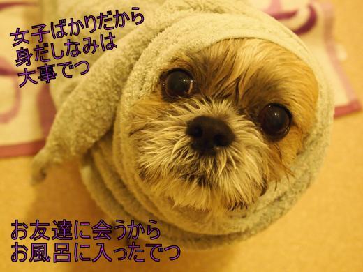 ・搾シ撤B258050_convert_20111126000857