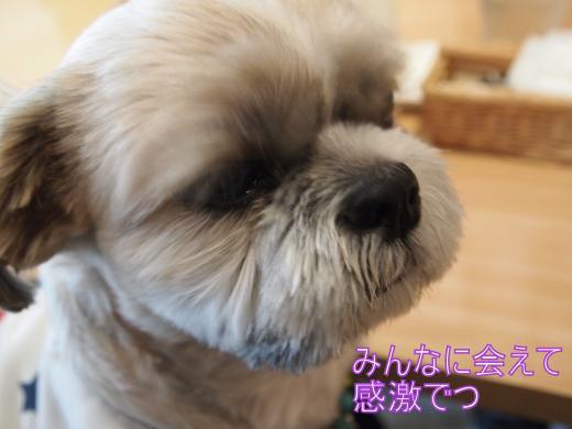 ・搾シ善B278109_convert_20111129014132