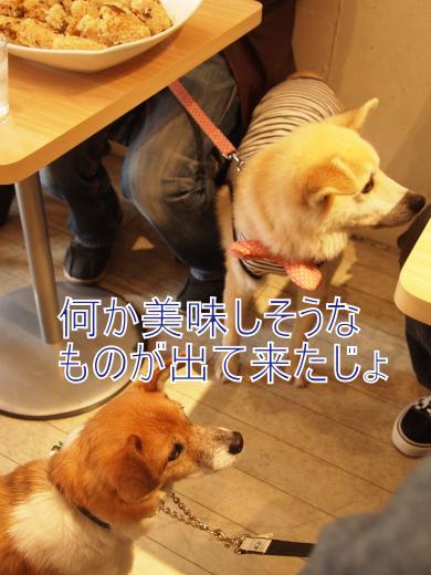 ・搾シ撤B278117_convert_20111129015251