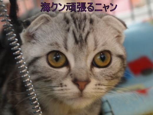 ・搾シ儕C048222+(0)_convert_20111207032357