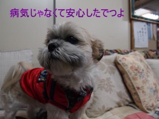 ・搾シ単1019452_convert_20120108011519