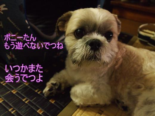 ・撰シ儕6104773_convert_20120131011000